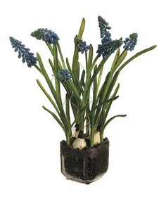 Another great find on #zulily! Muscari & Ceramic Pot Set by Allstate Floral & Craft #zulilyfinds