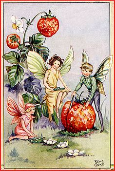 Strawberry Fairies, by Rene Cloke