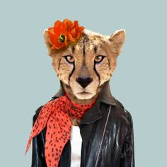 Cheetah - Zoo Portraits - Become the Animal
