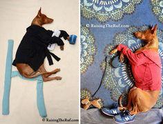 Les aventures extraordinaires d'un chien qui dort