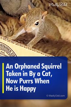 An Orphaned Squirrel Taken in By a Cat, Now Purrs When He is Happy Baby Animals, Cute Animals, Different Types Of Animals, Animal Rescue Stories, Baby Animal Videos, Mother Cat, Baby Squirrel, Mama Cat, Kitten Gif
