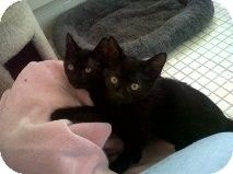 So sweet- we are in Lindenwold and ready to be adopted :)