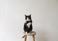 Cat + bow tie