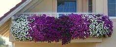 kvety na balkon - Hľadať v Google