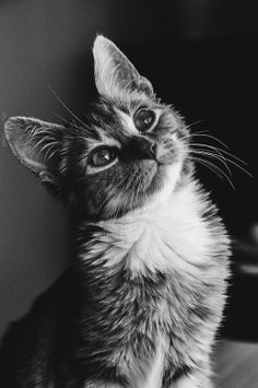 kitty cat love photography animals adorable Black and White eyes hipster vintage boho indie b&w cats Grunge animal amor retro pale black and grey Pretty Cats, Beautiful Cats, Animals Beautiful, Pretty Kitty, Beautiful Images, Animals And Pets, Baby Animals, Cute Animals, Animals Images
