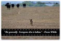 """Be Yourself.  Everyone else is taken."" - Oscar Wilde.  Read this post and other inspirational and motivational quotes at www.tootsweet4two.com."