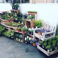 Bakken vullers opgelet! #varens #groen #urban #urbanjungle #gardening #tuinieren #schaduwplant #tuin #tuinplanten #tuintrends #groen