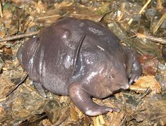 strange and unusual creatures | Freaky Weird Animals – Amphibians | Freaky Weird Animals