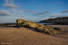 St Andrew's Beach St Andrews Scotland, Saints, Beach, Animals, Animales, The Beach, Animaux, Beaches, Animal