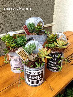 cactus cans
