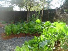 pdf on companion planting