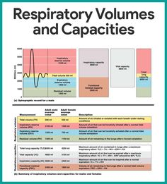 Respiratory System Anatomy and Physiology - NurseslabsYou can find Respiratory system and more on our website.Respiratory System Anatomy and Physiology - Nurseslabs Nursing School Tips, Icu Nursing, Nursing Tips, Nursing Cheat Sheet, Nursing Assessment, Funny Nursing, Nursing Memes, Respiratory System Anatomy, Respiratory Therapy