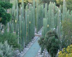 cactus maze - Google Search