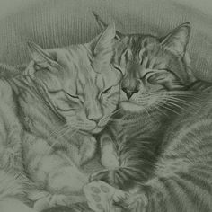 This picture is part of the Big Picture Art Project! Drawing by Donna Newsom Link in profile Country: USA The Story behind my drawing: This is a portrait of 2 buddy cats drawn with a #2 pencil on watercolor paper from a reference photo. It took about 8 hours of actual drawing time. After I finished it I signed it and sealed it before packing it a box to send to the kitties' pet mom. She really likes it and I'm glad I got to draw it for her. My connection to #Vancouver or what Vancouver…