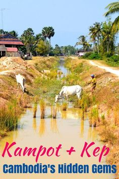 Get off the tourist trail and take a visit to Cambodia's Kampot and Kep! My favorite hidden destination in Southeast Asia. Be sure to add Kampot and Kep to your Cambodia travel itinerary! Cambodia Itinerary, Cambodia Beaches, Cambodia Travel, Laos, Vietnam, Kampot, Koh Tao, Asia Travel, Wanderlust Travel