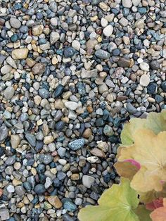 River Pebble - Great for outdoor landscaping! http://www.menards.com/main/building-materials/landscaping-materials/ground-cover-materials/river-pebble/p-1934697-c-5784.htm?utm_source=pinterest&utm_medium=social&utm_content=landscaping&utm_campaign=gardencenter