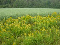 A field, somewhere in Nova Scotia. Nature is such a colorist.