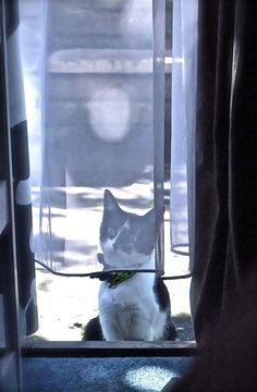 cat Jackie