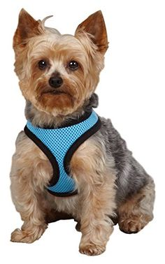 Casual Canine Pastel Mesh Dog Harness XSmall Blue >>> Check out the image by visiting the link.Note:It is affiliate link to Amazon.