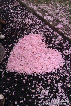 桜 花びらのハート