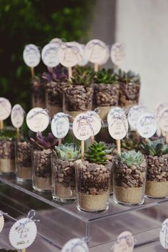 Plant wedding favor-succulents in glass bottle