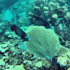 snorkeling, West End, Isla de Roatan, Honduras