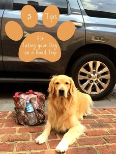 5 do not miss tops for taking a road trip wih your dog
