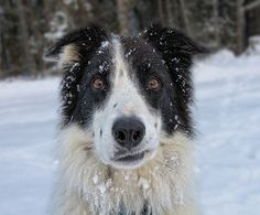 Animals In The Snow - Gallery