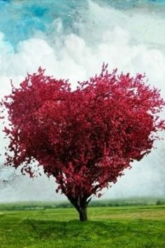 #Valentine's Day with #nature