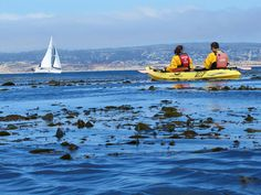 Sailboat and Kayakers on Monterey Bay by SeeMonterey, via Flickr