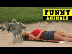 Try not to laugh challenge IMPOSSIBLE - FUNNY Videos 2016 - Funny Animals - YouTube