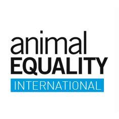 Top Charity: Animal Equality