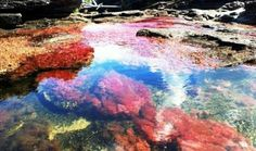 the river of five colors - cano cristales colombia
