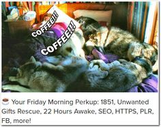 ☕ Your Friday Morning Perkup: 1851, Unwanted Gifts Rescue, 22 Hours Awake, SEO, HTTPS, PLR, FB, more!