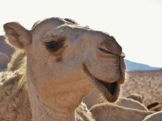 Birds, Ark, Inspiration, Awesome, Animales, Pretty Pictures, Camels, Drawing Faces, Explore