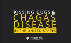 Kissing Bugs and Chagas Disease in the U.S. | Texas A&M University