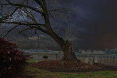 barlow cemetery tree copyright 2011 Brenda Roudebush