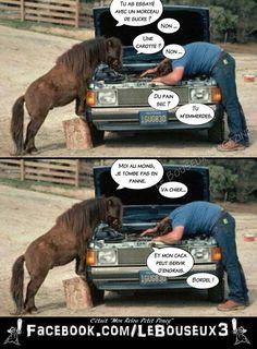 Horses, Baseball Cards, Sports, Animals, Style, Gardens, Joke Stories, Humor, Husky Jokes