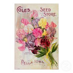 Vintage Seed Catalog, Sweet Pea Flowers Poster