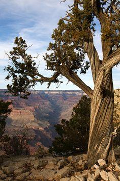 Bright Angel Canyon, Grand Canyon National Park; photo by rwihlelmsen