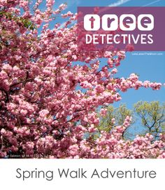 Tree Detectives: Simple tips for making a spring walk a memorable adventure *Pinning this for the weekend