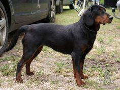 Die 10+ besten Bilder zu slovensky kopov   hunde