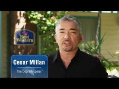 """7 Tips on Traveling With Your Pet from Cesar Millan. Ideally situated in the heart of Vancouver's West End the BEST WESTERN PLUS Sands Hotel is perfectly situated for those early morning walks with Fido. With English Bay, """"Pet Friendly Beaches"""" and Stanley Park within steps of our hotel, you will have endless opportunities to explore the best Vancouver has to offer with your """"Best Friend""""."""