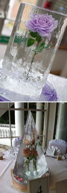 Oh my God guys we could totally freeze a rose it would be the BEST THING EVER