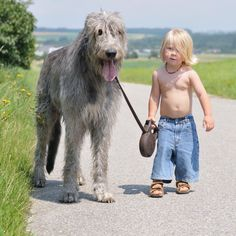 Adorable picture I have ever stumbled upon. I am having a hard time determining who is cuter! The Irish Wolfhound is adorable or the little boy with the blonde locks.. Both are just precious.
