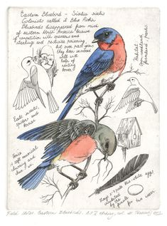 NATURE JOURNAL - FIELD NOTES - Fine Art Etchings by Marina Terauds