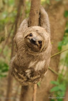 When I'm sad I Google pictures of sloths and their smile instantly makes me smile. | #animallover #cute