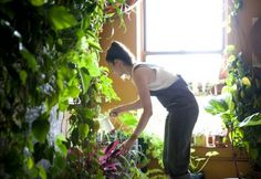 """Astonishing New York indoor garden! """"I think that the only way I've really been able to survive in New York is by surrounding myself with plants,"""" says Summer Rayne Oakes, who lives in what might be New York City's greenest apartment. Green Apartment, Brooklyn Apartment, York Apartment, Apartment Goals, Apartment Living, Apartment Therapy, Apartamento No Brooklyn, Mason Jar Garden, Mason Jars"""