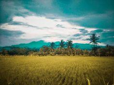seumpama...  xiaomi mi4 #landscape  #landscapephotography  #landscaper  #landscaping  #landscapeture  #exploreciamis  #phonegraphy  #ponselklik  #hptografi  #xiaomiclick  #xiaomiclick_id  #xiaomi