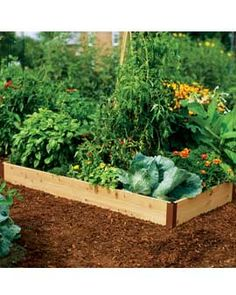 i think a raised bed would best. thinking of starting with a small kitchen garden.